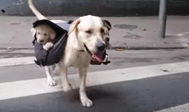 dog_02