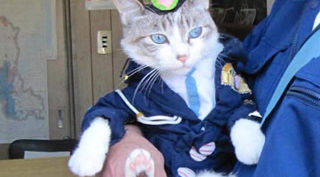 policecat_00