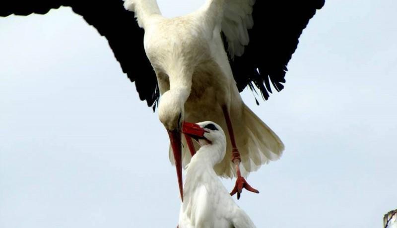 stork_03