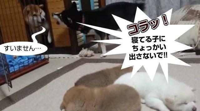 dog_00