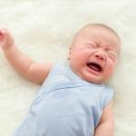 泣いている赤ちゃんの頭をなでなでする猫